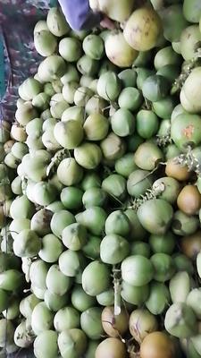 海南省琼海市琼海市椰青 2.5 - 3斤