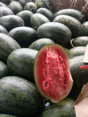 广西壮族自治区崇左市凭祥市黑美人西瓜 5斤打底 8成熟 1茬 有籽