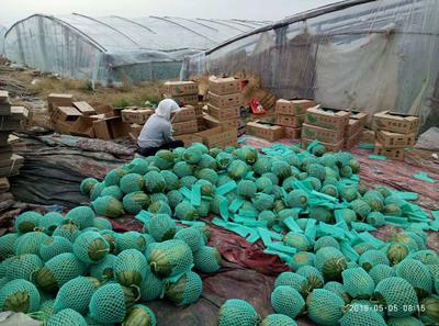 山东省潍坊市寒亭区早春红玉西瓜 4斤打底 10成熟 1茬 有籽