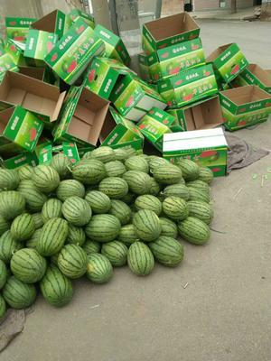 山东省潍坊市寒亭区早春红玉西瓜 4斤打底 9成熟 1茬 有籽