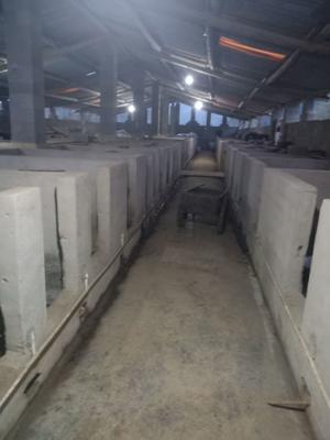 贵州省遵义市绥阳县贵州豪猪 20-30斤