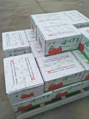 陕西省延安市黄龙县红富士苹果 75mm以上 表光 纸+膜袋