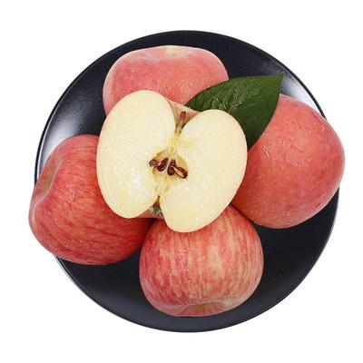陕西省宝鸡市眉县红富士苹果 70mm以上 表光 光果