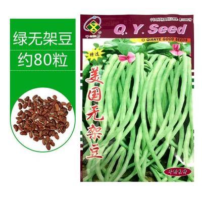 江苏省宿迁市沭阳县长青豆角种子 ≥99%