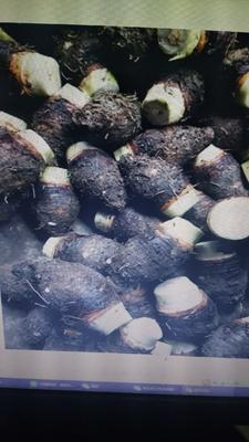 广西壮族自治区贺州市昭平县香芋 6cm以上