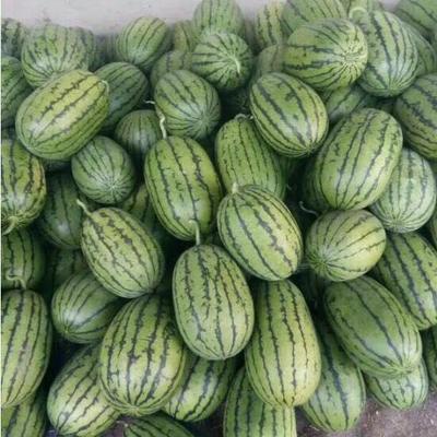 山东省潍坊市寒亭区早春红玉西瓜 5斤打底 10成熟 1茬 有籽