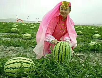 宁夏回族自治区中卫市中宁县硒砂瓜 10斤打底 9成熟 1茬 有籽
