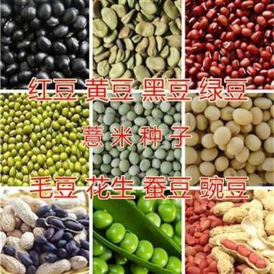 江西省南昌市南昌县黄豆种子 大田用种 ≥99% ≥99% ≤3%