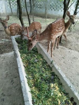 贵州省贵阳市乌当区鹿角