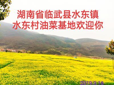 湖南省郴州市临武县油菜籽