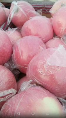 陕西省咸阳市乾县红富士苹果 75mm以上 条红 膜袋