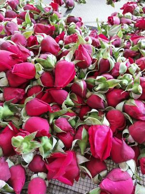 云南省红河哈尼族彝族自治州弥勒市法国墨红玫瑰