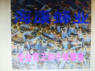 湖南省永州市宁远县中蜂
