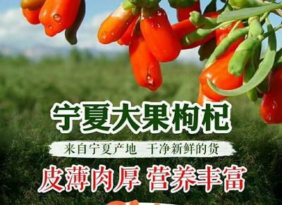 宁夏回族自治区银川市金凤区中宁枸杞 特优级