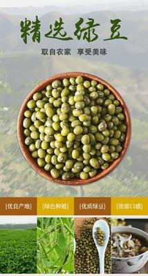 广东省潮州市湘桥区进口绿豆 袋装 1等品