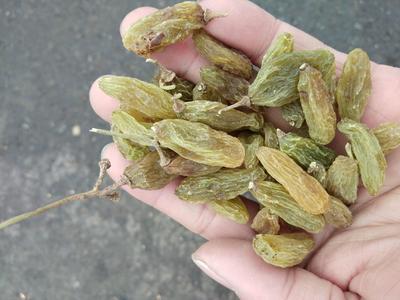 新疆维吾尔自治区乌鲁木齐市水磨沟区绿香妃葡萄干 优等