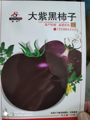 江苏省宿迁市沭阳县大紫黑柿子种子 ≥95% 常规种 ≥85%