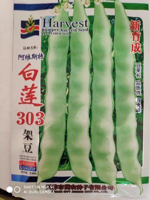 江苏省宿迁市沭阳县白莲303架豆种子 ≥85%