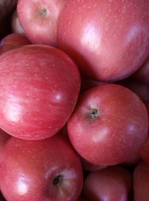 陕西省咸阳市乾县富平苹果 70mm以上 片红 纸袋