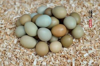 广西壮族自治区南宁市兴宁区山鸡种蛋 孵化 箱装