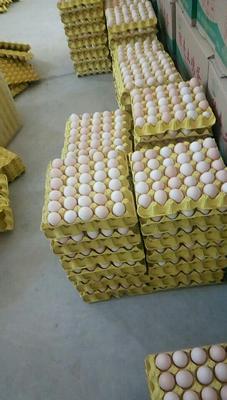 云南省文山壮族苗族自治州文山市土鸡蛋  食用 箱装