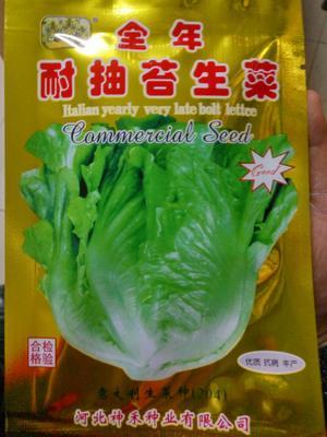 江苏省宿迁市沭阳县生菜种子 ≥85%
