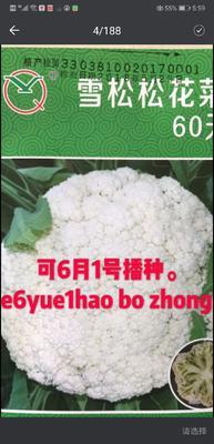 山东省济南市历城区松花菜种子 原种 ≥95%