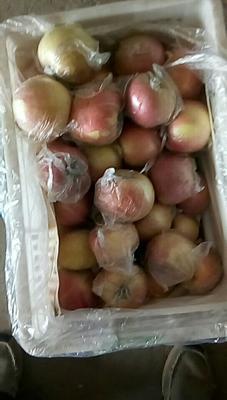 安徽省宿州市砀山县红富士苹果 80mm以上 片红 膜袋
