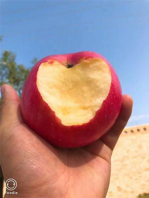 陕西省延安市洛川县洛川苹果 75mm以下 片红 膜袋