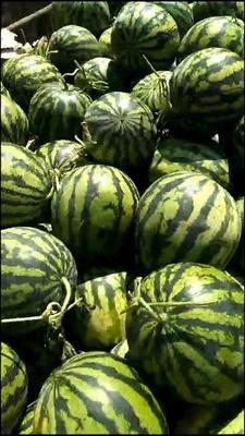 云南省西双版纳傣族自治州勐腊县甜王西瓜 2斤打底 8成熟 2茬 有籽