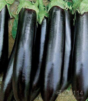 山东省临沂市兰陵县黑金刚长茄 15cm以下 长茄