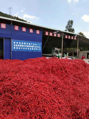 贵州省黔南布依族苗族自治州贵定县红椒 10~15cm 中辣 红色