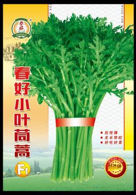 甘肃省酒泉市肃州区小叶茼蒿种子