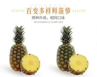 陕西省宝鸡市渭滨区香水菠萝 1.5 - 2斤