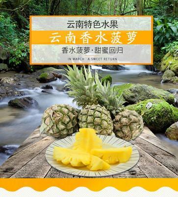 云南省西双版纳傣族自治州勐海县香水菠萝 1 - 1.5斤