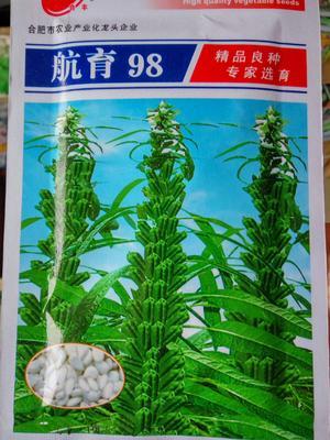 江苏省宿迁市沭阳县白芝麻种子 原种 ≥90%