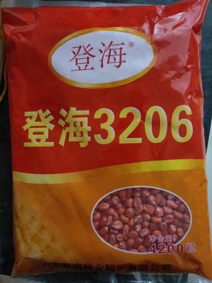 河南省安阳市滑县登海3206 双交种 ≥90%