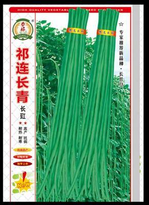 甘肃省酒泉市肃州区长豇豆 40cm~70cm