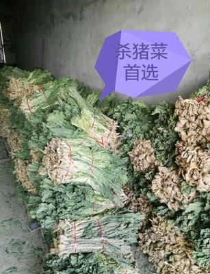 内蒙古自治区赤峰市喀喇沁旗白菜干 6-12个月