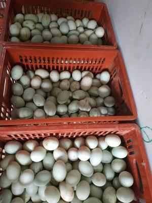 广东省清远市清城区白鸭蛋  食用 散装