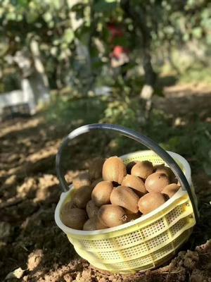 陕西省西安市周至县徐香猕猴桃 100~120克
