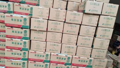 广东省湛江市徐闻县香水菠萝 1 - 1.5斤