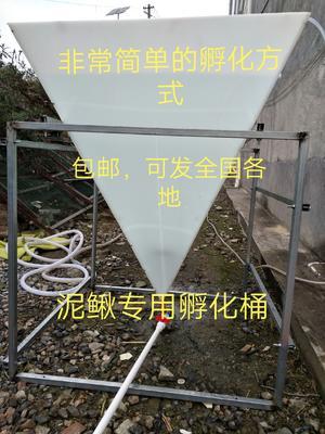 湖南省邵阳市洞口县养殖孵化机
