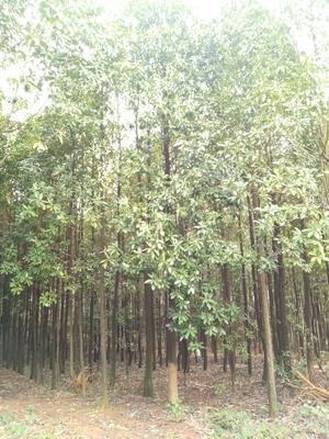 广西壮族自治区桂林市兴安县木兰