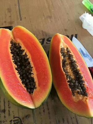 贵州省黔西南布依族苗族自治州兴义市红心木瓜 2 - 2.5斤