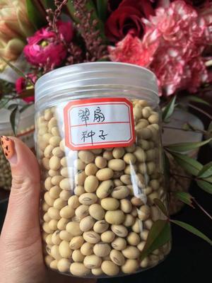 安徽省蚌埠市五河县黄豆种子  大田用种 ≥99.9% ≥99% ≤10% 翠扇豆种,产地直销。