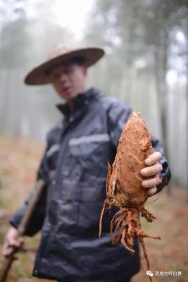 这是一张关于春笋 鲜笋 的产品图片