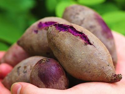 广西壮族自治区玉林市北流市紫罗兰紫薯 3两以下