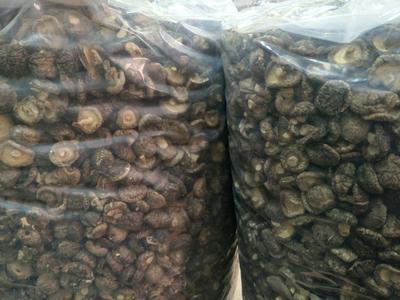 河南省郑州市中牟县黑面菇干  袋装 1年 西峡香菇人工分拣