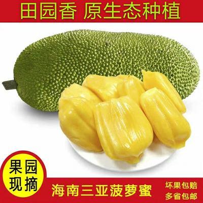 【推荐】新鲜海南三亚菠萝蜜果地现摘包邮直发 多规格可选